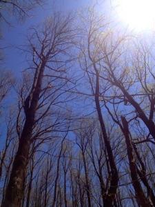 58 trees