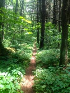 96 Trail