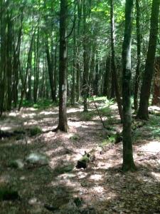 97-woods