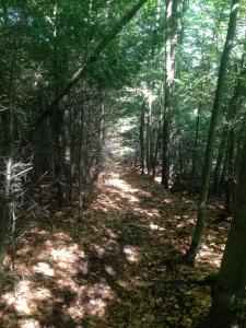 97 Woods