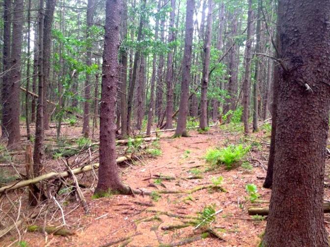 98 woods