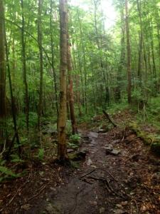 106 woods