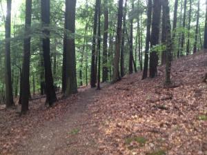 99 woods